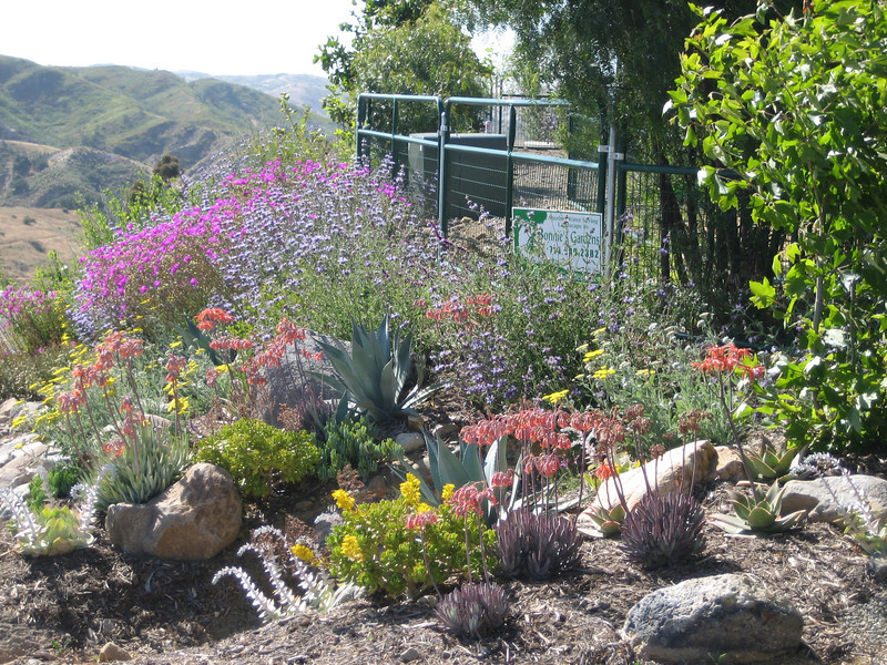 drought resistant landscape awesome drought tolerant