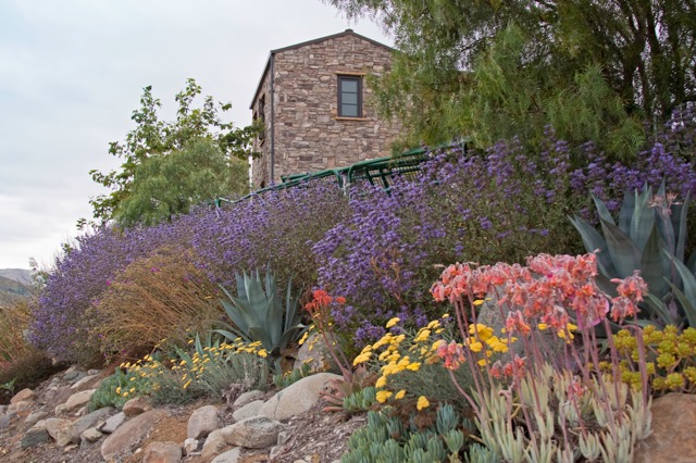 Drought Tolerant & Native