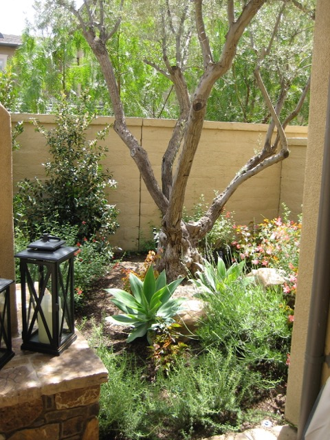 Native Mediterranean Landscape Design Photos