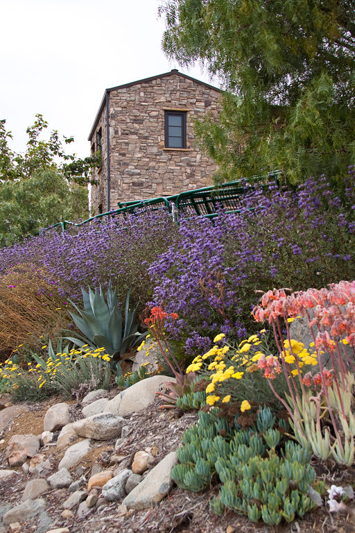 best landscape ideas drought tolerant landscaping orange